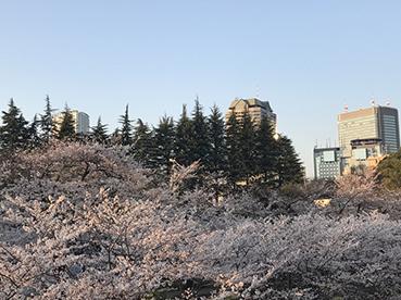 2018sakura3.jpg