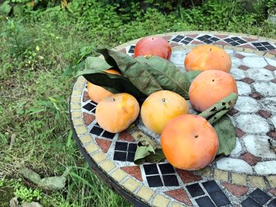 庭の柿.jpg