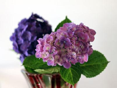 紫陽花紫.jpg