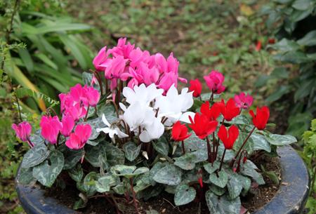 gardensikuramen3.jpg