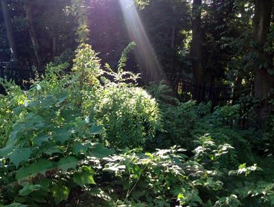 o森の光.jpg